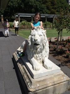 Lilli lion